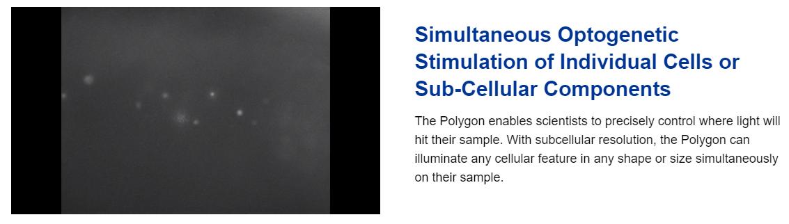 Polygon1000